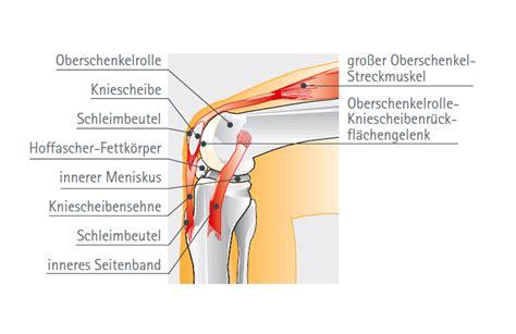 knieschmerzen innen kniegelenk knieschmerzen kniebeschwerden praxisklinik
