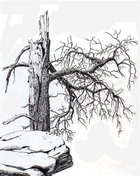Dead Tree Drawing by Inger Hutton