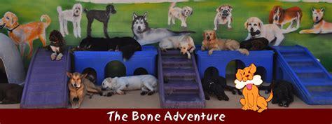 the bone adventure backyard the bone adventure backyard 28 images the bone