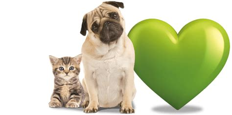 Pet Insurance   Get a Quote   LV=