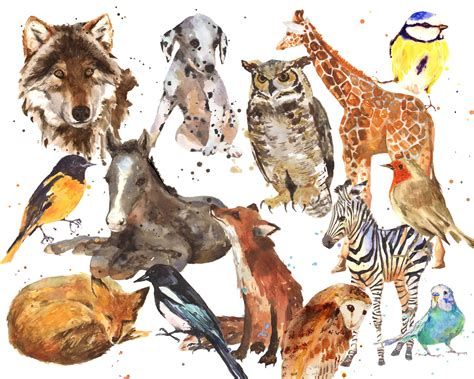And the Winner is…. – Alison Fennell Art Groupings Of Animals