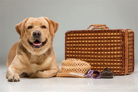 Vacation Pet Pet Pet Product by Pet Travel How To Prepare For A Road Trip With Your Pet