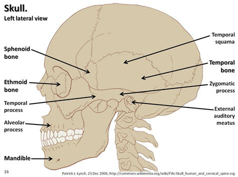 skull diagram labeled skull diagram lateral view with labels part 2 axial ske