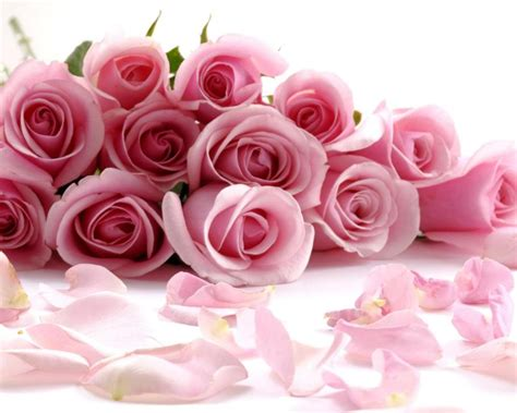 gambar bunga mawar pink  tumpukan pernik dunia