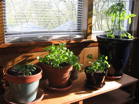 indoor vegetable garden for apartments 187 indoor gardening tips bringing nature in your apartment