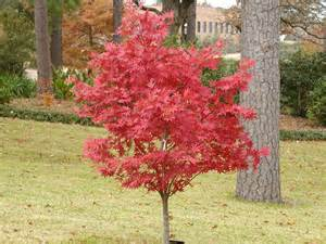 meilleurs arbustes de jardin arbustes 224 feuillage
