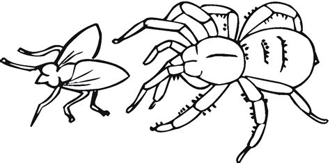 cartoon pictures spiders cliparts