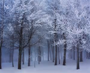 Winter Wall Murals Jp London Ustrip Peel And Stick Frozen Narnia Winter Forest