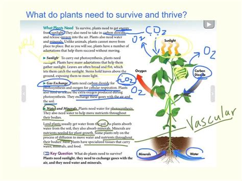 what does a plant need to survive and thrive on vimeo