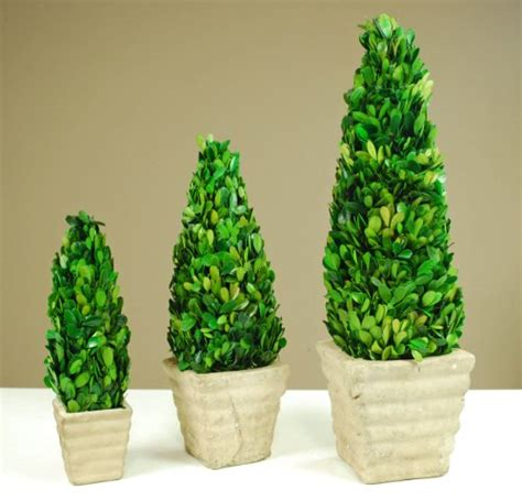 real topiary trees for sale galt international naturally preserved real boxwood cone