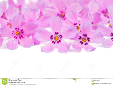Pink Small Flowers small pink flowers stock photo image 63459683