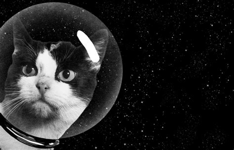 Cat In Space the secret history of the cat in space