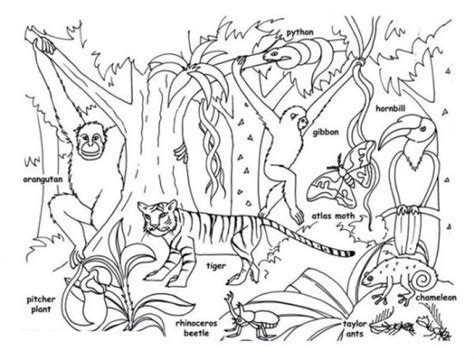 coloring book pages jungle animals tropical jungle and rainforest animals coloring page