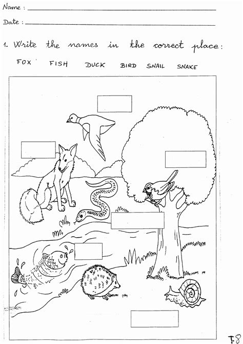 2nd grade science worksheets proworksheet