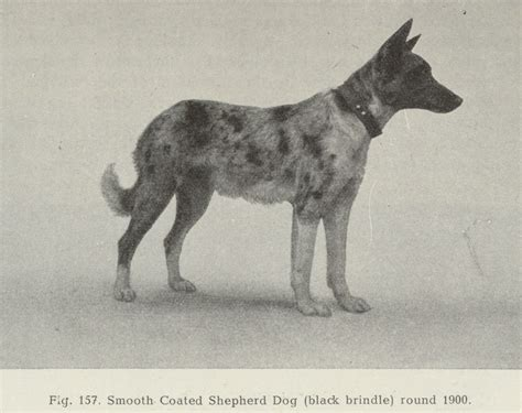 ruskin house of shepherds history of the german shepherd ruskin house of shepherds