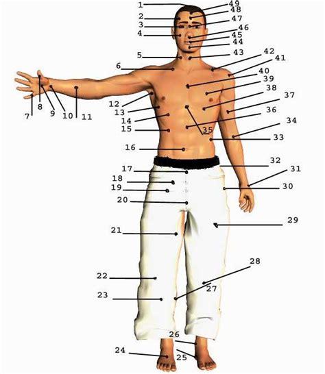 organi interni corpo umano lato destro defensa personal efectiva y extrema puntos vitales parte1