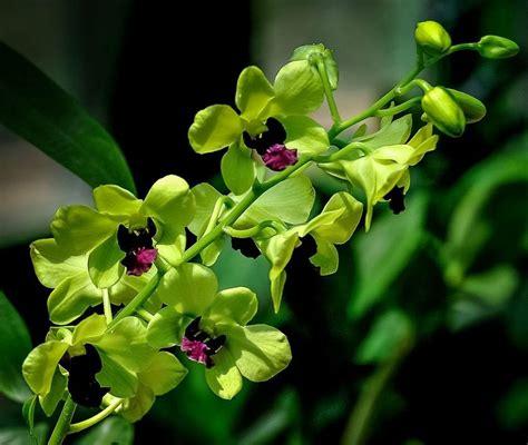 imagenes sorprendentemente bellas orquideas mas lindas del mundo