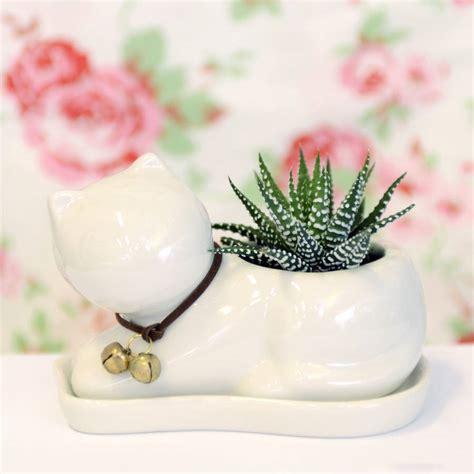 ceramic succulent planter ceramic cat planter with a succulent by dingading