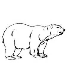 free printable polar bear coloring pages kids