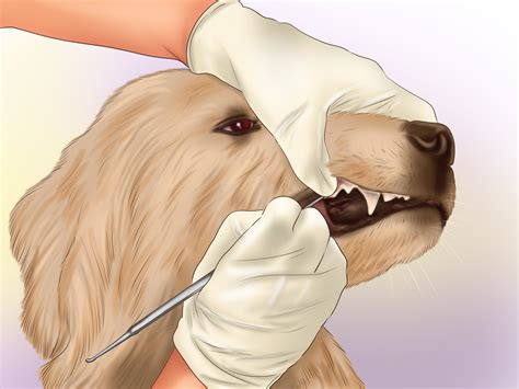 how to brush dogs teeth how to brush a s teeth with pictures wikihow