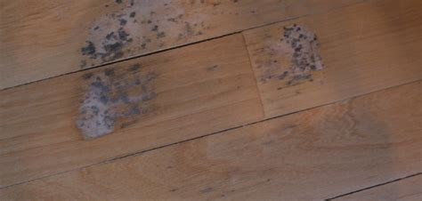how to remove a section of laminate flooring austin mold removal removing mold from walls