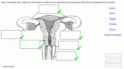 diagram of reproductive system human reproductive system diagram car interior design