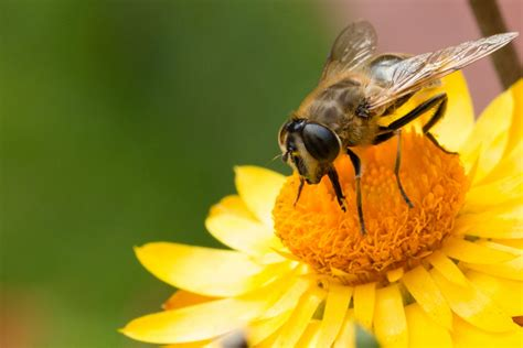 backyard honey bees event calendar puget sound beekeepers association