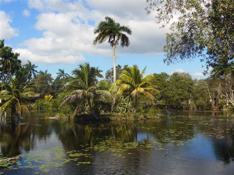 Areca Palm free images landscape tree flower lake river pond