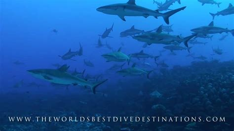 The World S Best the world s best dive destinations hd
