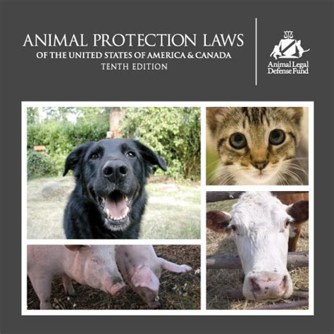 comfort animal law protection laws