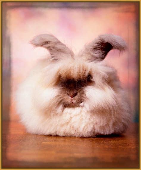 imagenes de conejitos von mensaje de motivacion las mas tiernas imagenes bonitas de conejitos imagenes