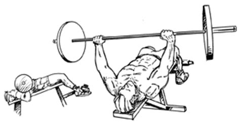 bench press definition decline dumbbell bench press building muscle 101 party invitations ideas