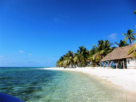 bird island belize laughing bird caye wikipedia