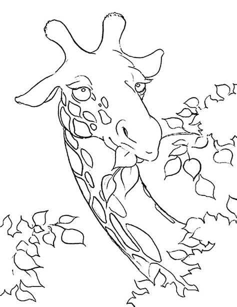 giraffe head coloring pages giraffe head colouring pages az coloring pages