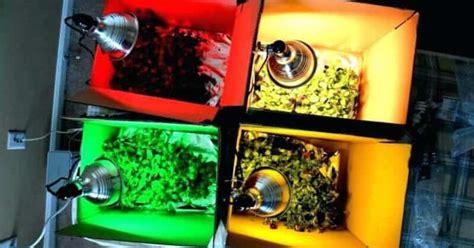 color  light spectrum affect