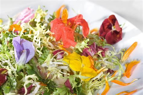 flower food luxurious garnish edible flowers in food eat savor