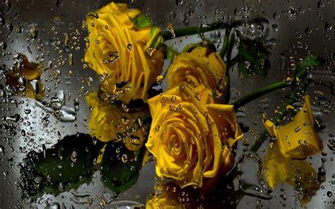 wallpaper 3d rose 3d rose live wallpaper wallpapersafari