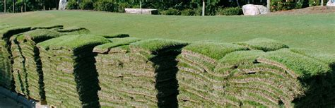 Landscape Supply Kissimmee Sod Delivery Poinciana Call 407 240 1023