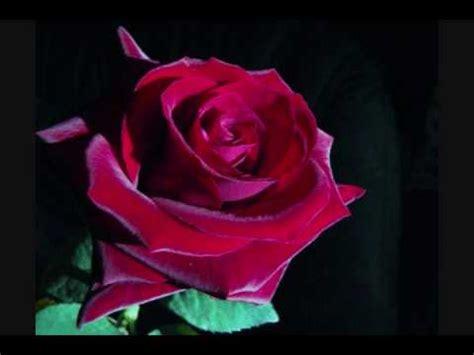 Rosas Para Mama | rosas para mam 225 youtube
