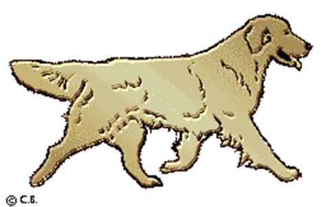 tanbark golden retrievers golden retriever clip golden retrievers golden retriever forums