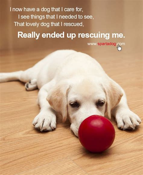 christmas pet quotes quotesgram
