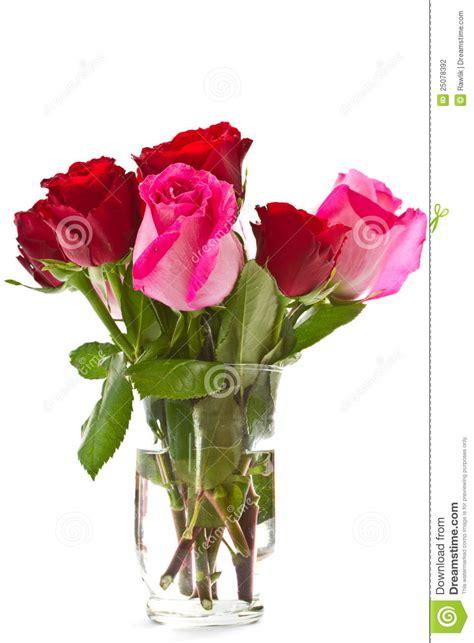 imagenes hermosas brillantes rosas rosadas hermosas brillantes fotograf 237 a de archivo