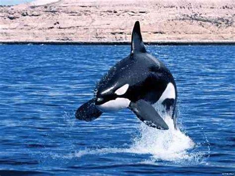 agua viva penguin modern incr 237 veis fotos de animais marinhos ex 243 ticos id 233 ias modernas