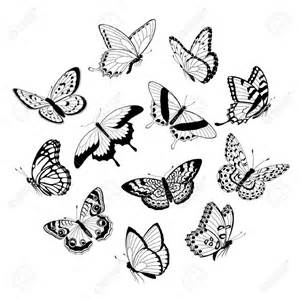 Flying Butterfly Outline by 1000 Images About Herbal Medicine Alt On Drawings And Quotes