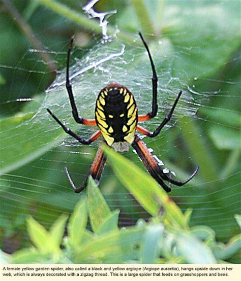 Garden Spider New York Finger Lakes New York Nature Centers Clark