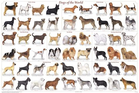 how many dogs is many how many breeds of dogs are there how many of this how many of that