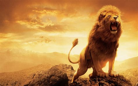 wallpaper hd of lion lion hd wallpaper 287