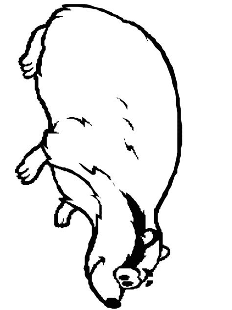 badger animals coloring pages coloring book