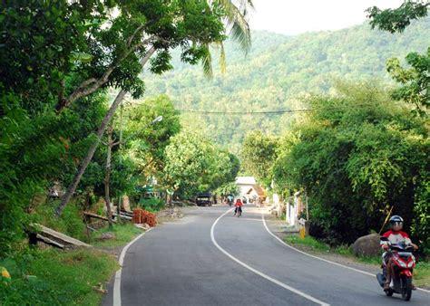 Pakan Walet Nusantara walet 14 walet berlimpah di kabupaten dompu bebeja