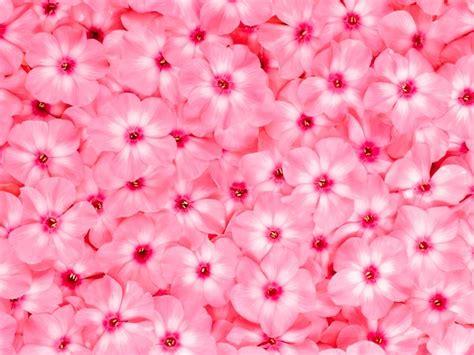 fiore rosa significato significato colore rosa significato fiori colore